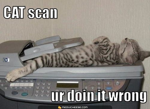 cat-scan-ur-doin-it-wrong