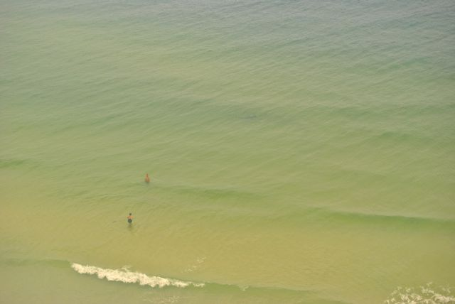 Florida 2013 Shark