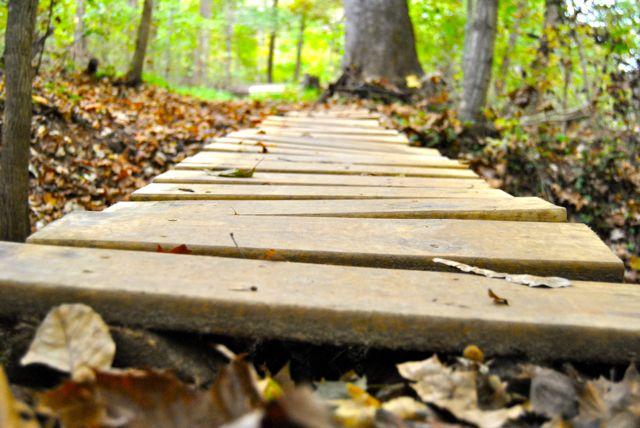 Fall Walk in the Park - Bridge