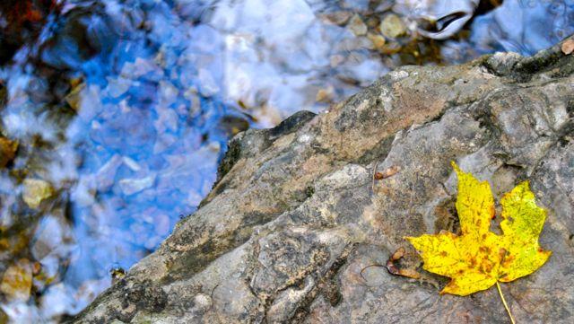 Fall Walk in the Park - Creek & Leaf