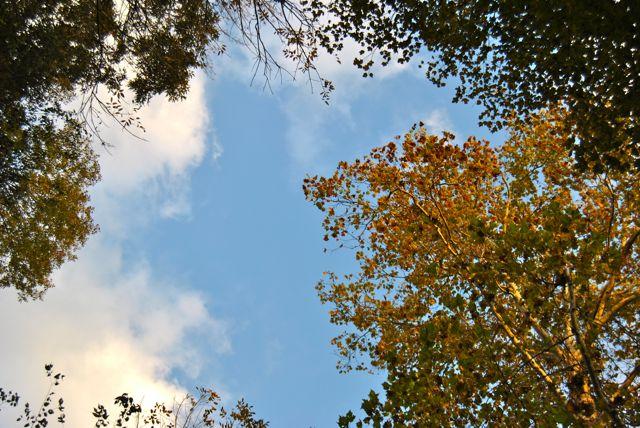 Fall Walk in the Park - Sky