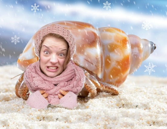 Seasonal Hermit Snow