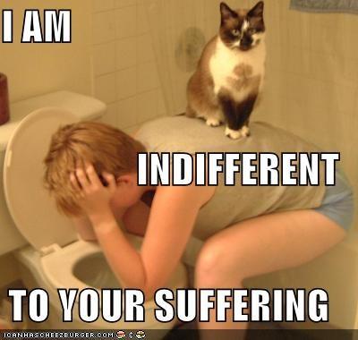 I am indifferent cat meme