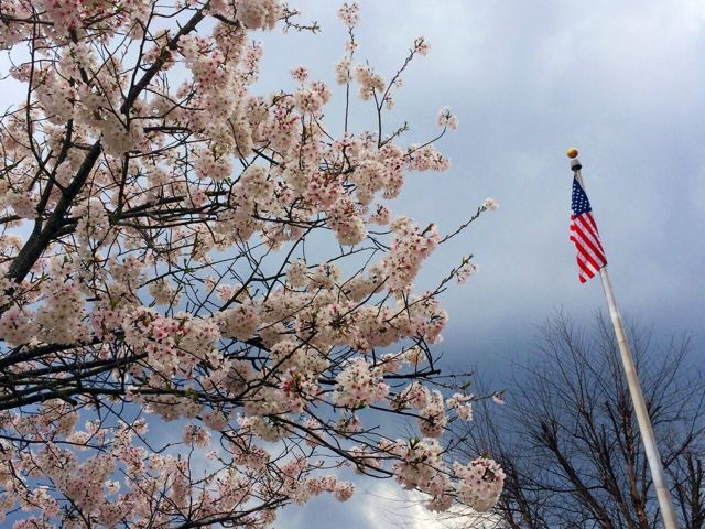 Spring Blossoms - Artsy Pic.jpg