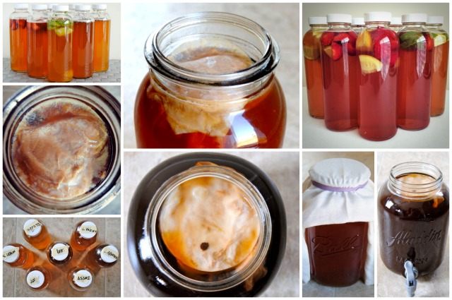 Kombucha Brewing Collage
