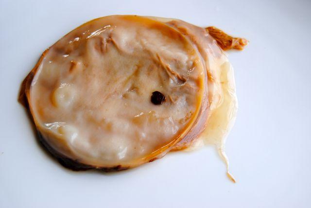 Kombucha SCOBY