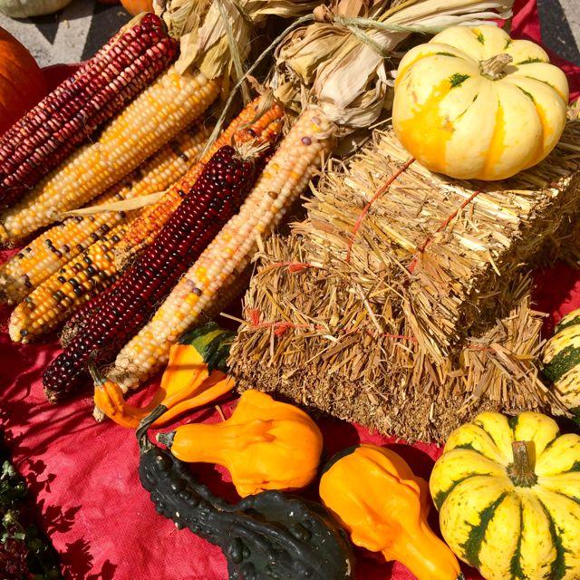 Fall at the Farmer's Market