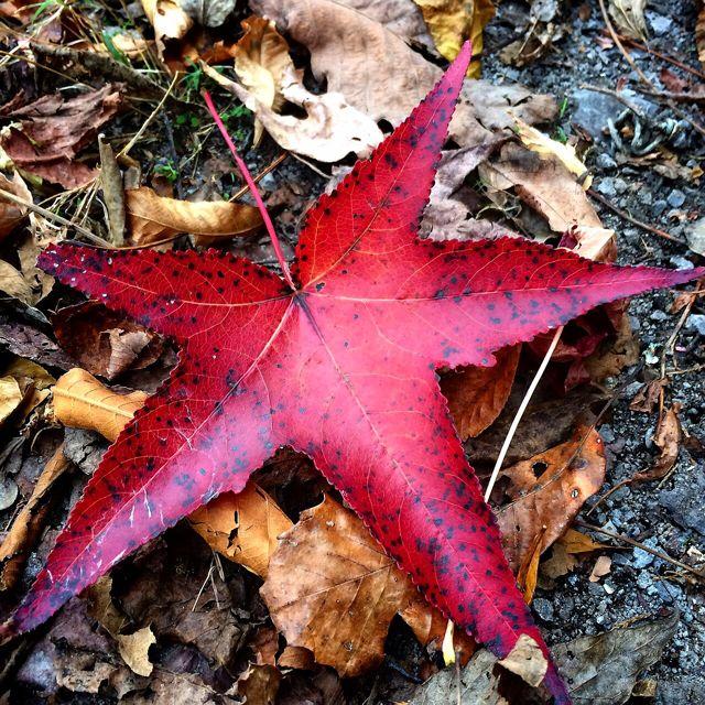 Park Fall Leaves